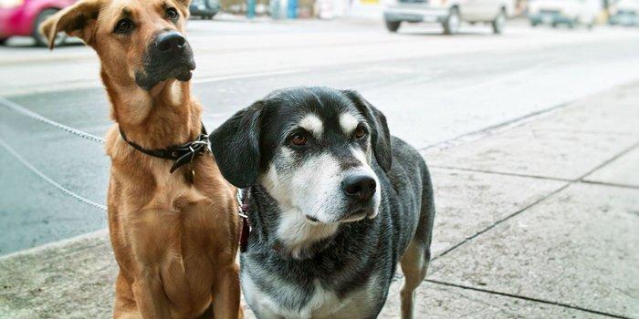 Exigen decapitar perros y llevar la cabeza para acreditar servicio social en Tabasco