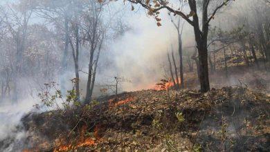 613 incendios en Michoacán, han consumido casi 13 mil hectáreas