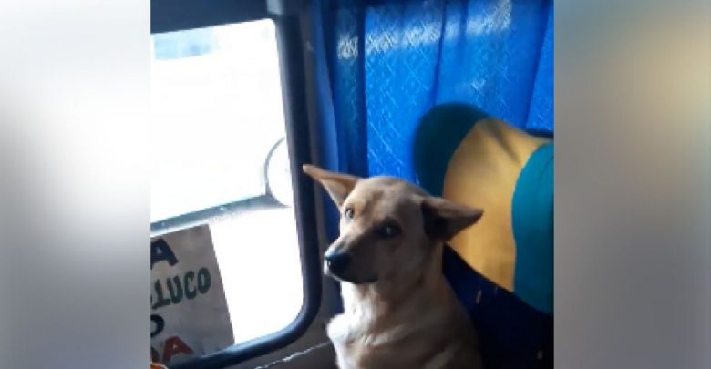 VIDEO: Chofer deja que un perro suba a su microbús para que no se moje