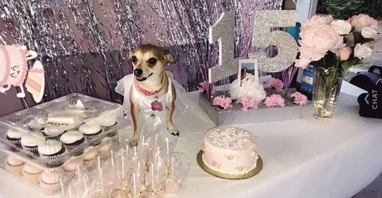 Joven organiza fiesta de XV años a su perrita