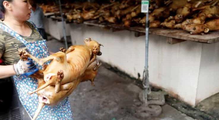 El comercio de carne de perro y gato expande la rabia en Asia