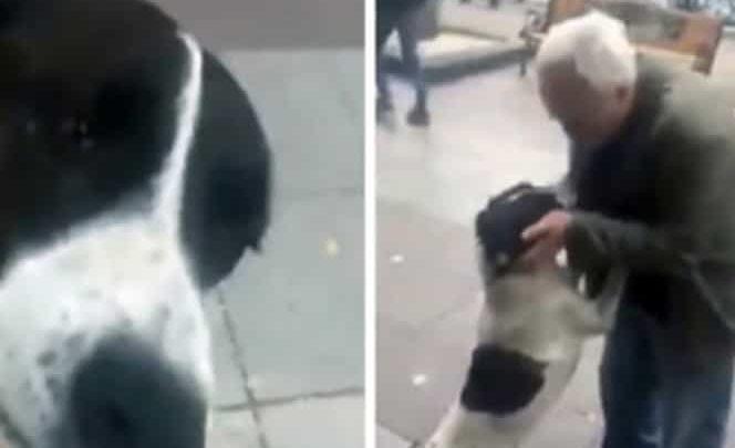 Así reaccionó un perrito al reencontrarse con su dueño luego de 3 años