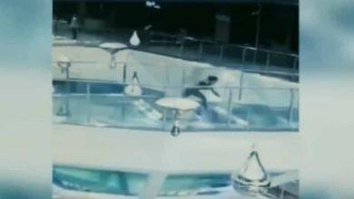 VIDEO: Mujer tropieza y cae a un tanque lleno de tiburones que iban a ser alimentados