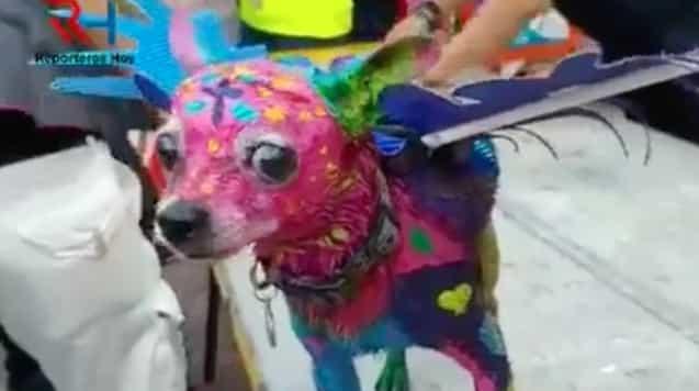 Pinta a su perro como alebrije y genera indignación en redes sociales