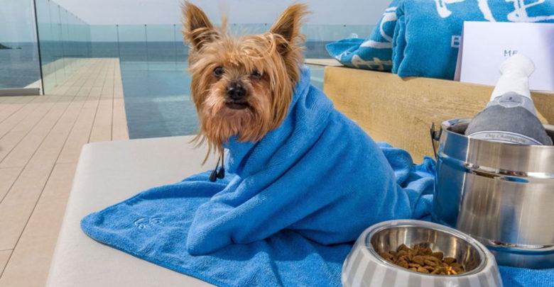Propone Morena que mascotas hereden bienes de sus dueños