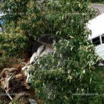 Al menos diez muertos y 12 lesionados deja accidente de camión en Angangueo
