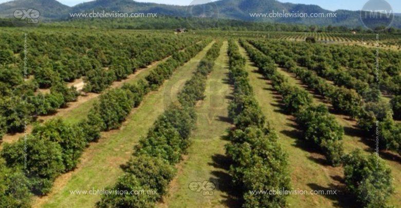 El cambio de uso de suelo es el mayor reto en Michoacán: SAGARPA
