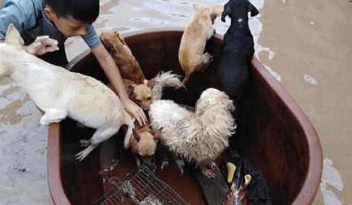 Niño rescata animales durante inundaciones en Nayarit