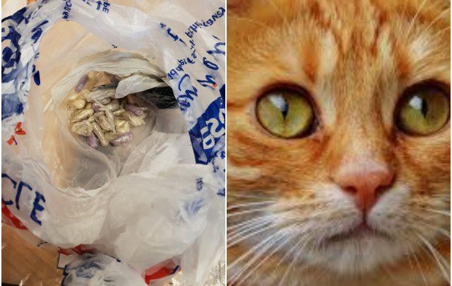 Gato sale de paseo y regresa a casa de su dueño con una bolsa llena de drogas