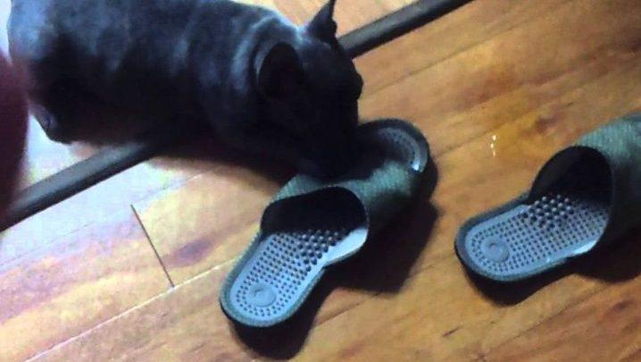 Compra animalito creyendo que era un perro y resulta ser una inusual criatura