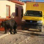 """Trabajadores de una mina de Coahuila le dan un """"ride"""" a un Oso"""