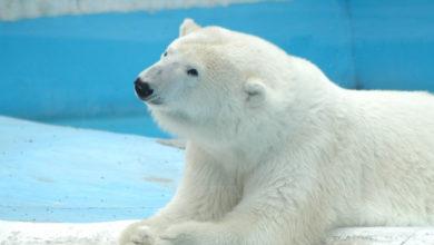 Animalistas exigen conocer causas de muerte de Yupik, pues eran polémicas las condiciones en las que vivía