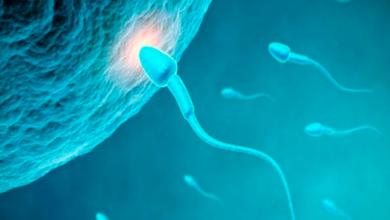 Peligra la humanidad porque los hombres se están quedando sin espermatozoides