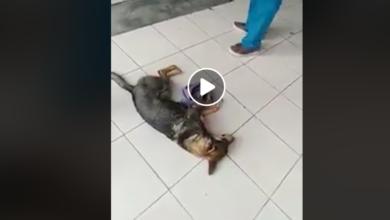 VIDEO: Perrito fue atropellado y veterinario se niega a atenderlo por que no le habían pagado