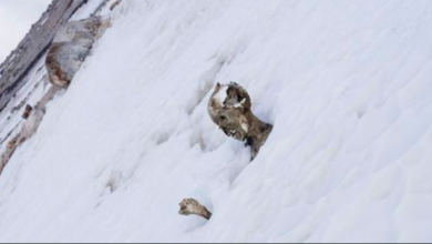 Rescatan los cuerpos momificados de tres alpinistas en el Pico de Orizaba