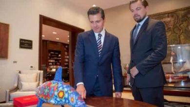 Leonardo DiCaprio no ha aportado fondos para rescate de vaquita marina: Semarnat
