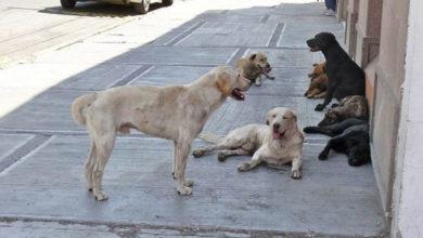 Aprueban iniciativa para matar perros callejeros que 'estorben el tránsito y rompan bolsas de basura'