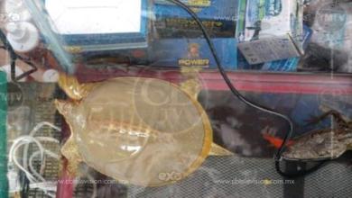 """Los 4 animales asegurados en """"El Cañafest"""" quedan bajo el resguardo del Zoológico de Morelia"""