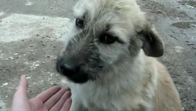 VIDEO: La sorprendente recuperación de un perro que fue rescatado de la calle