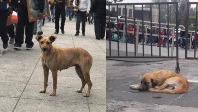 Peregrinos abandonan a sus perros en su camino a la Basílica