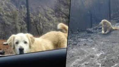 Perro esperó la llegada de sus dueños durante un mes tras los incendios de California