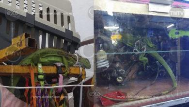 """Requieren a vendedor en el """"Cañafest"""" por comerciar con especies protegidas"""