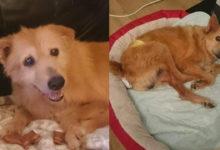 Perro fue abusado sexualmente cada fin de semana durante cinco años