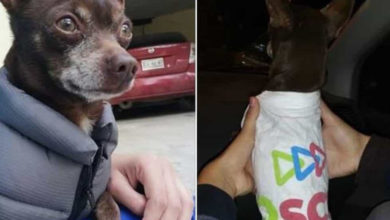 Perro se da una vuelta con un chaleco 'carísimo' y momentos después regresa ¡con una playera del PRI!