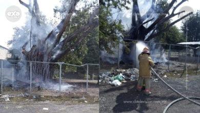 Bomberos apagan incendio de árbol al lado de gasolinera