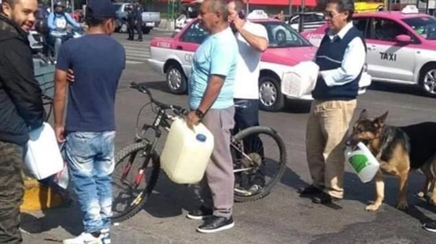 Perro hace fila para comprar gasolina y se vuelve viral