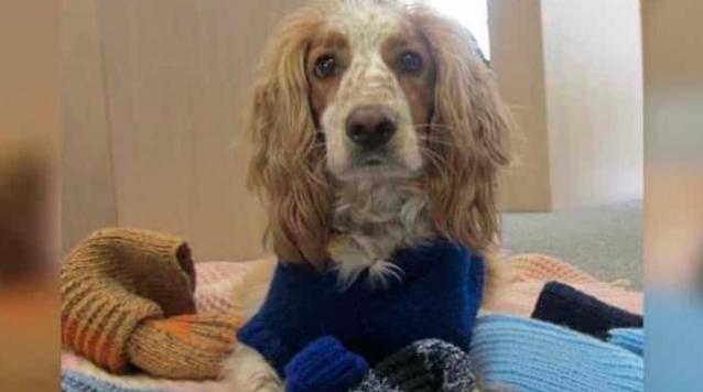 Mujer teje 450 mantas y suéteres para regalarlos a un refugio de perros