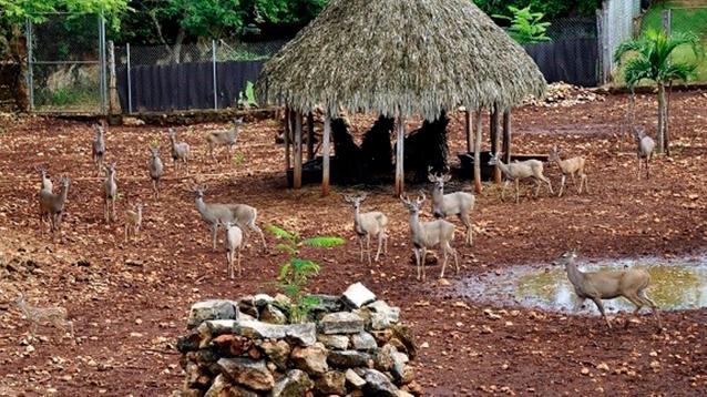 Las UMA, espacios donde la vida silvestre se restaura