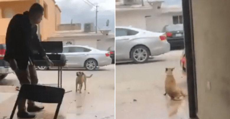 Video: Indigna supuesto trabajador de la CFE por apuñalar a perro que buscaba comida