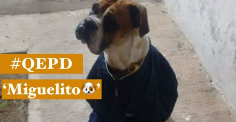 Exigen justicia para un perro, le dieron de tragar pirotecnia y murió