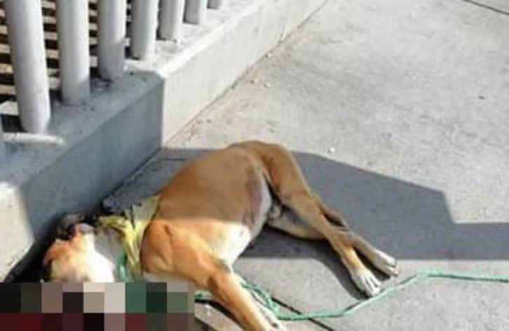 Colocaron pirotecnia en el hocico de un perro para que le explotara