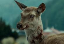"""Alertan que la enfermedad del """"ciervo zombi"""" podría propagarse a los humanos"""