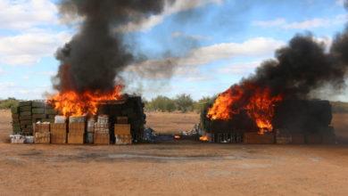 Incinera FGR más de 12 toneladas de narcóticos en Sonora
