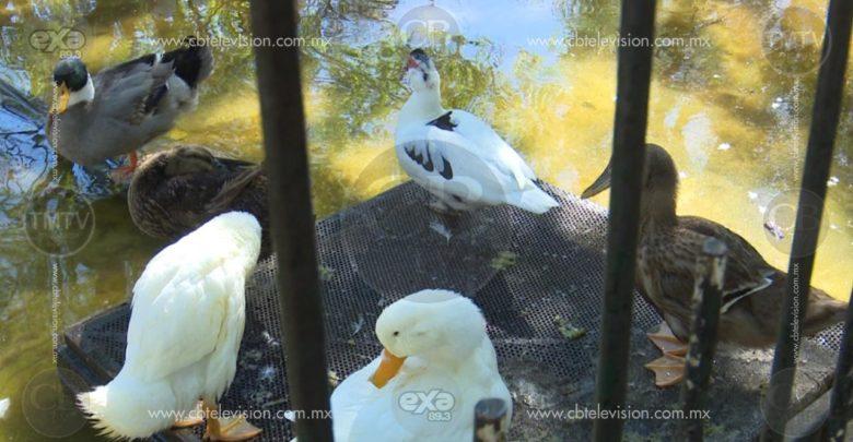 """Denuncian ciudadanos falta de limpieza en """"fuente de los patos"""""""