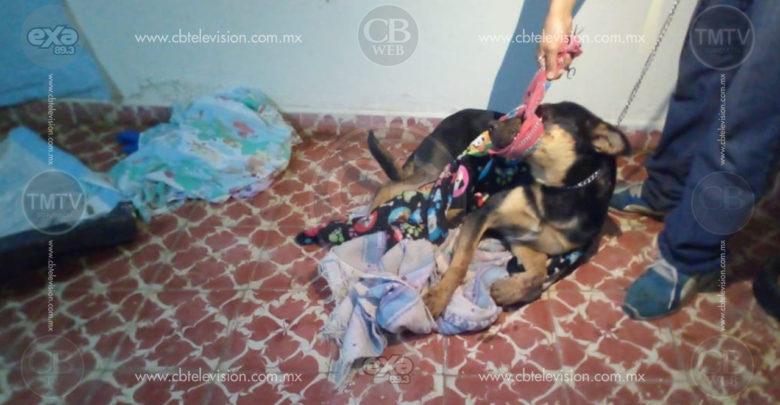 Confirman que fueron dos adolescentes los que torturaron y mataron a perrito en Ciudad Hidalgo