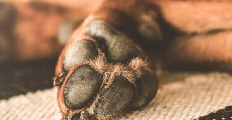 Zitácuaro: Hombre mata a un perro a golpes