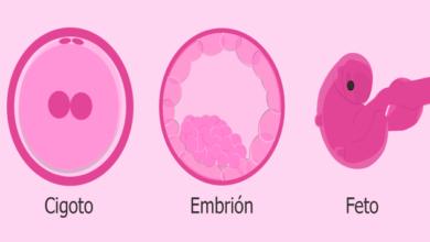 Un embrión no es una persona: Biólogo de la UNAM
