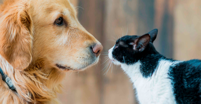 Se aplicarán más de 15 millones de vacunas gratuitas antirrábicas a perros y gatos en todo el país