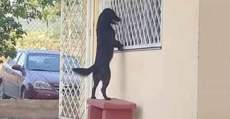 Perrito llegó hasta la escuela de su amo para verlo a través de la ventana
