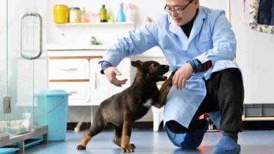 China clona a perrito policía y ya ha resuelto varios casos de asesinato
