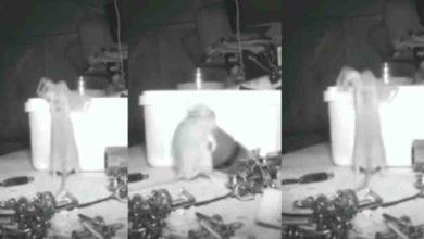 Alguien ordenaba todas las noches su taller, pone una cámara y descubre que era un ratón