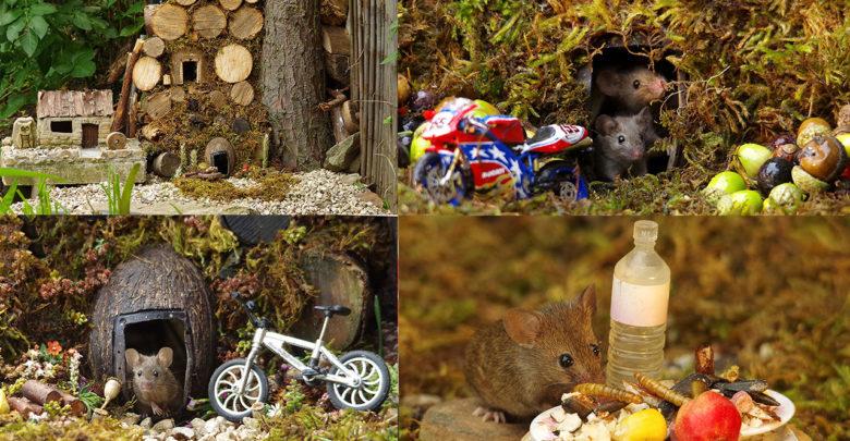 Descubre familia de ratones en su casa y decide hacerles una hermosa aldea