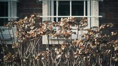 Ancianita murió sola y olvidada por su familia en su casa, encuentran su cuerpo momificado