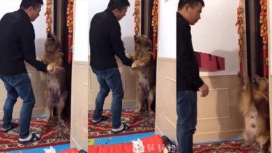 Perrita suplica a su dueño que no se lleve a sus cachorros