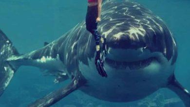 Alerta en Carolina del Norte por enorme tiburón de 1 tonelada