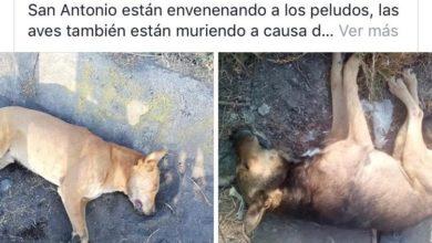 A través de redes sociales, usuarios denuncian que están envenenando perros en el fraccionamiento Arko San Antonio, Morelia.
